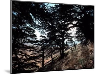 View Through the Branches of Lebanon's Famous Cedar Trees-Ira Block-Mounted Photographic Print