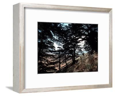 View Through the Branches of Lebanon's Famous Cedar Trees-Ira Block-Framed Photographic Print