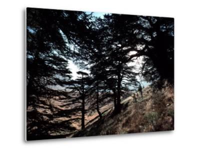 View Through the Branches of Lebanon's Famous Cedar Trees-Ira Block-Metal Print