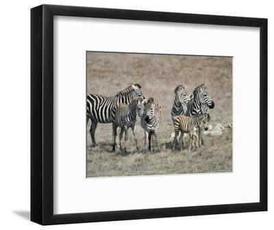 Zebras on the Hearst Castle Property, California-Rich Reid-Framed Photographic Print