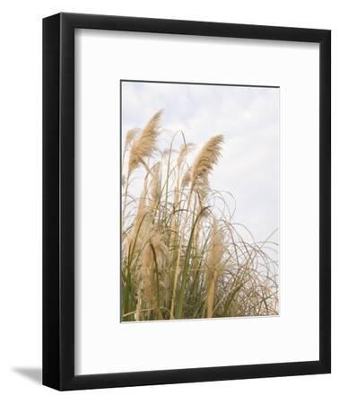 Yellow Weeds Moving in Wind, California-James Forte-Framed Photographic Print