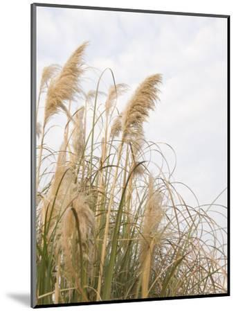 Yellow Weeds Moving in Wind, California-James Forte-Mounted Photographic Print