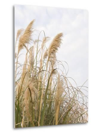 Yellow Weeds Moving in Wind, California-James Forte-Metal Print