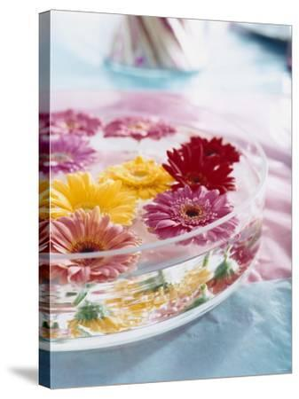 A Bowl of Flowers Floating in Water (Table Decoration)-Alexander Van Berge-Stretched Canvas Print