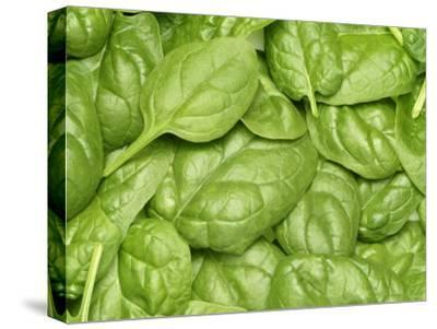 Spinach--Stretched Canvas Print