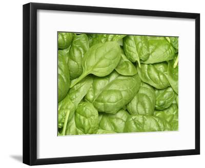 Spinach--Framed Premium Photographic Print