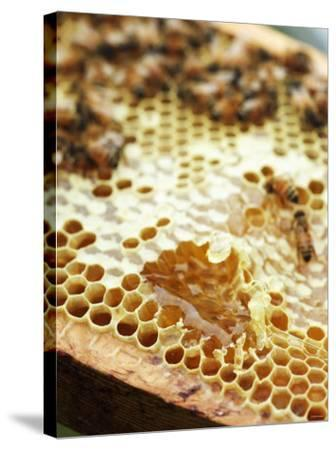 A Honeycomb with Bees-Matilda Lindeblad-Stretched Canvas Print