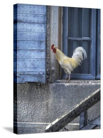 White Rooster on Window Ledge-Joerg Lehmann-Stretched Canvas Print