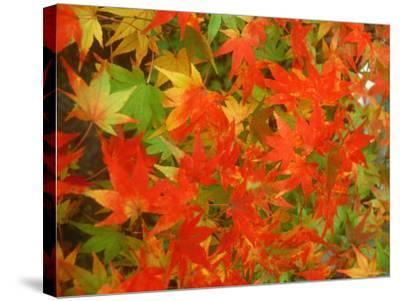 Maple Leaves--Stretched Canvas Print