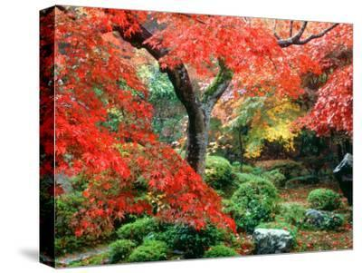 Garden with Maple Trees in Enkouin Temple, Autumn, Kyoto, Japan--Stretched Canvas Print