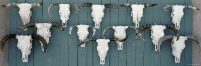 Cow Skulls Hanging on Planks, Taos, New Mexico, USA--Framed Photographic Print