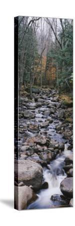 Water Flowing in the Forest, Adirondack Mountains, New York, USA--Stretched Canvas Print