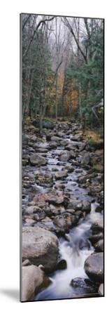 Water Flowing in the Forest, Adirondack Mountains, New York, USA--Mounted Photographic Print