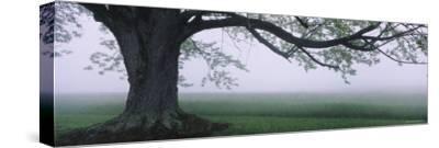 Tree in a Farm, Knox Farm State Park, East Aurora, New York, USA--Stretched Canvas Print