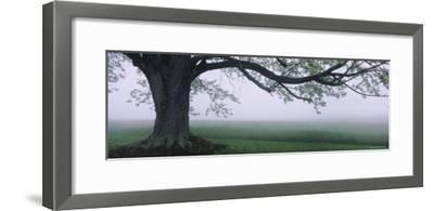 Tree in a Farm, Knox Farm State Park, East Aurora, New York, USA--Framed Photographic Print