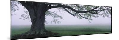Tree in a Farm, Knox Farm State Park, East Aurora, New York, USA--Mounted Photographic Print