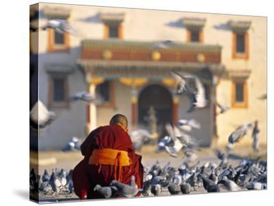 Gandan Khiid Monastery, Ulaan Baatar, Mongolia-Peter Adams-Stretched Canvas Print