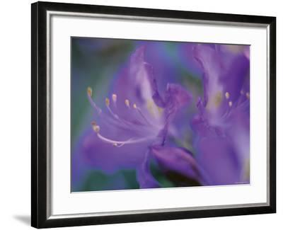 Azalia-Jon Arnold-Framed Photographic Print