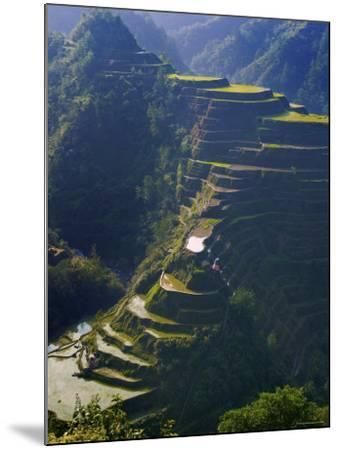Rice Terraces of Banaue, Luzon Island, Philippines-Michele Falzone-Mounted Photographic Print