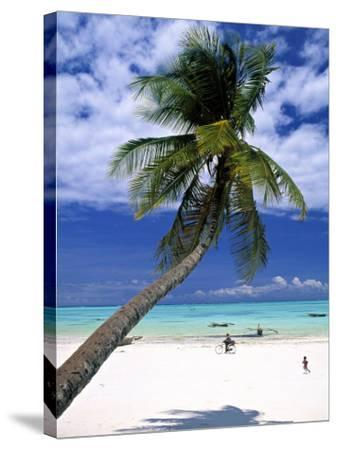 Palm Tree and Beach, Zanzibar, Tanzania-Peter Adams-Stretched Canvas Print