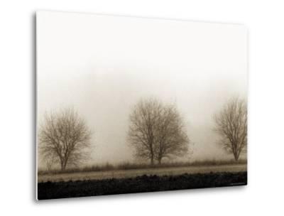 Trees-Monika Brand-Metal Print