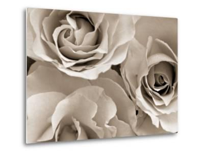 Three White Roses-Robert Cattan-Metal Print
