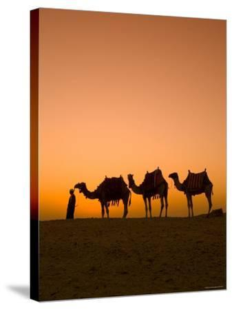 Camels Near the Pyramids at Giza, Cairo, Egypt-Doug Pearson-Stretched Canvas Print