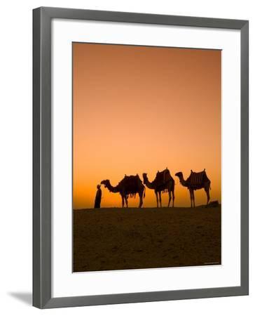 Camels Near the Pyramids at Giza, Cairo, Egypt-Doug Pearson-Framed Photographic Print