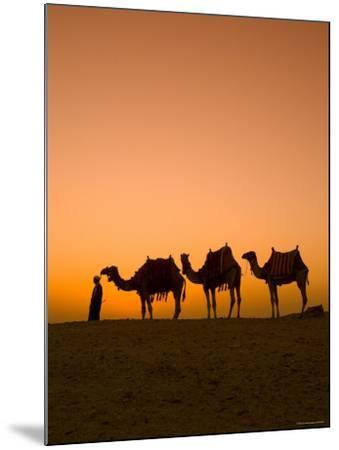 Camels Near the Pyramids at Giza, Cairo, Egypt-Doug Pearson-Mounted Photographic Print