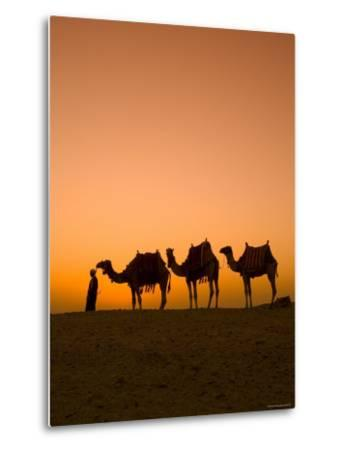 Camels Near the Pyramids at Giza, Cairo, Egypt-Doug Pearson-Metal Print