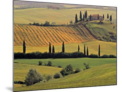 Val d'Orcia, Tuscany, Italy-Walter Bibikow-Mounted Photographic Print