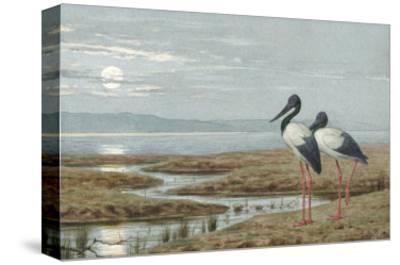 Birds Against a Stark Moonlit Landscape, c.1870-90-Henry Stacey Marks-Stretched Canvas Print