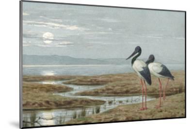 Birds Against a Stark Moonlit Landscape, c.1870-90-Henry Stacey Marks-Mounted Giclee Print