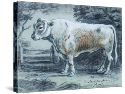 Leicestershire Bull, 18th Century-Copleston Warre Bampfylde-Stretched Canvas Print