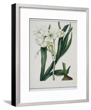 White Flowers with Long Dark Green Leaves-Samuel Holden-Framed Giclee Print