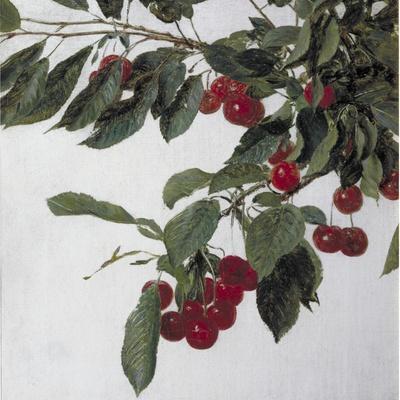 Cherries, c.1883-Henri Fantin-Latour-Stretched Canvas Print