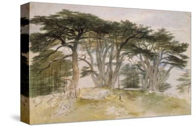 Cedars of Lebanon-Edward Lear-Stretched Canvas Print