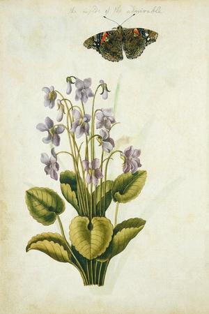 Botanical Study of a Violet-Jacques Le Moyne De Morgues-Stretched Canvas Print