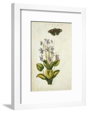 Botanical Study of a Violet-Jacques Le Moyne De Morgues-Framed Giclee Print