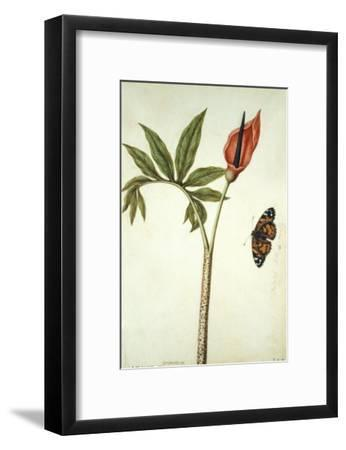 Botanical Study of a Dragon Lily and Butterfly-Jacques Le Moyne De Morgues-Framed Giclee Print