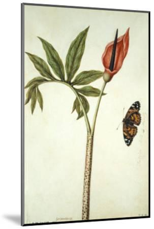 Botanical Study of a Dragon Lily and Butterfly-Jacques Le Moyne De Morgues-Mounted Giclee Print