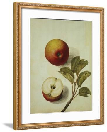 Botanical Study of an Apple-Jacques Le Moyne De Morgues-Framed Giclee Print