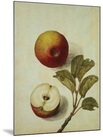 Botanical Study of an Apple-Jacques Le Moyne De Morgues-Mounted Giclee Print