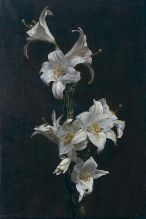 White Lilies, c.1883-Henri Fantin-Latour-Stretched Canvas Print