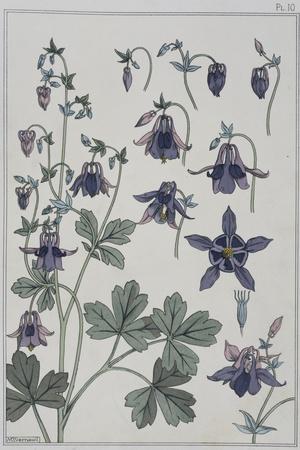 Botanical Diagram of Columbine-Eugene Grasset-Stretched Canvas Print