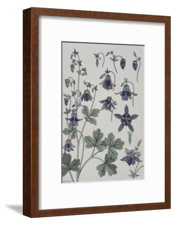 Botanical Diagram of Columbine-Eugene Grasset-Framed Giclee Print