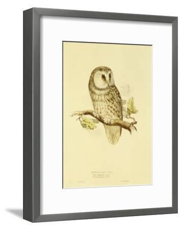 Illustration of Tengmalm's Owl-Edward Lear-Framed Giclee Print