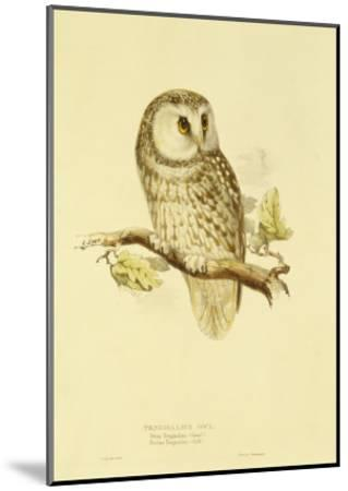 Illustration of Tengmalm's Owl-Edward Lear-Mounted Giclee Print