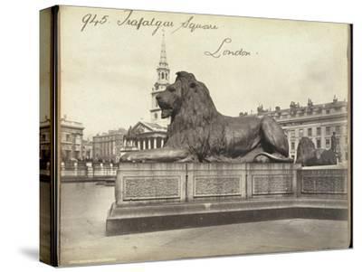 Stone Lion, Trafalgar Square, London, 19th Century-Francis Frith-Stretched Canvas Print