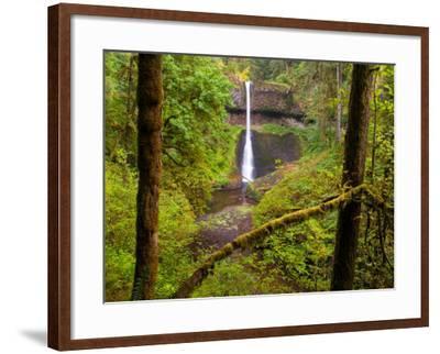 Silver Falls State Park, Salem, Oregon-Darrell Gulin-Framed Photographic Print